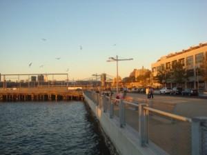 Pier 6 birds
