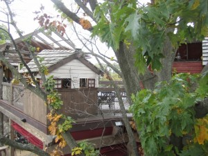 treehouse at Loxley's