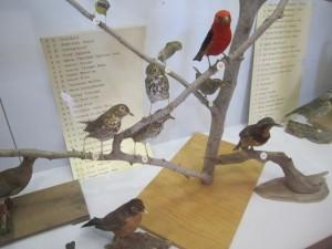 bird display