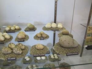 more bird eggs