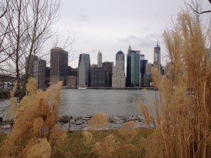 Manhattan view with grasses