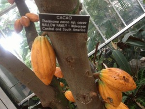 chocolate tree with label