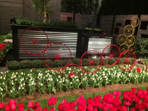 bike wheels and tulips